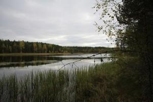 järvimaisemaa-poronpolun-varrelta